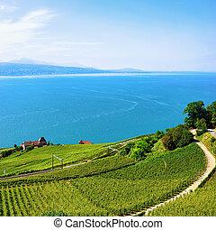 genève, terrasses, lac, vignoble, suisse, ligne ferroviaire, lavaux
