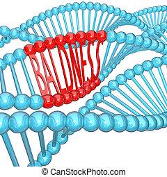 genética, -, hereditario, hebra, adn, calvicie