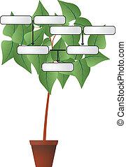 genealogía, planta