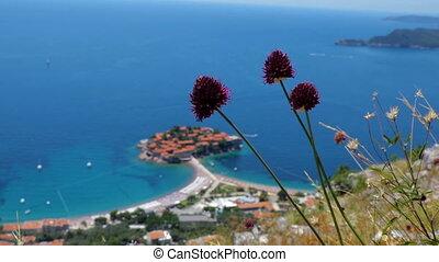 General good view of Sveti Stefan and wildflowers....