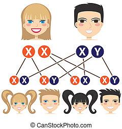 genere, dipendenza, chromosomes.