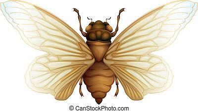 Generic cicada illustration - Illustration of general cidada...