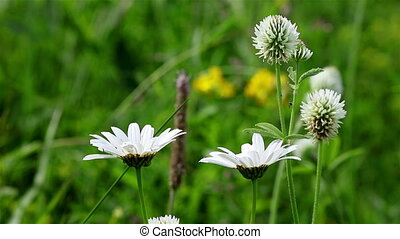 Closeup of generic field flowers on a windy day