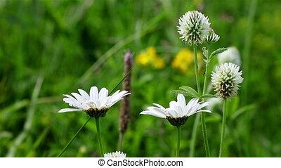 generic field flowers background - Closeup of generic field...