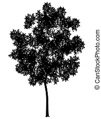 Detailed illustration of a generic tree silhouette