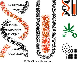 Genetic Analysis Composition of Cannabis - Genetic analysis...