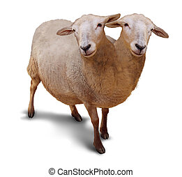 Genetic disorder and abnormality in biological DNA sequence with a farm sheep as a conjoined twin joined together in utero as a scientific and medical concept of a new breed of animal on a white background.