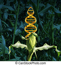 Genetically Modified Crops - Genetically modified crops and ...