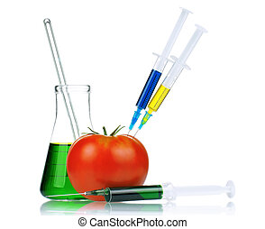 Genetically modified organism - ripe tomato with syringes...