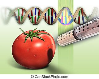 Genetically modified tomato and dna sequence. Digital...