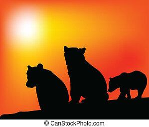 genieting, beren, vector, drie