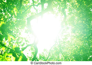 genom, solljus, träd, lysande
