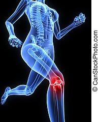 genou, douloureux, jointure