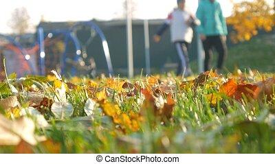 gens, arbres., feuilles, relâcher, automne, parc, forêt, baissé, cour de récréation