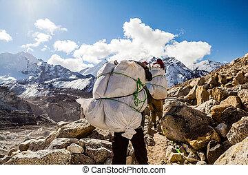 gens marcher, piste, dans, himalaya, montagnes
