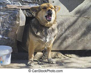 gentil, yard, chien, près, les, cabine, dans, les, yard