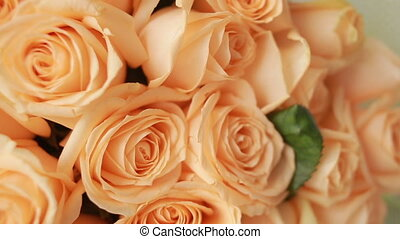 Rose flower backgrounds, gentle big bouquet of peach roses