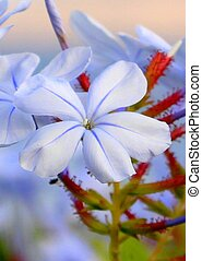 Gentle blue small flowers. Summer. Vacation Travel.