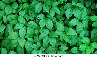 Gentle Breeze Stirring Leaves of Plants in a Garden. FullHD 1080p video