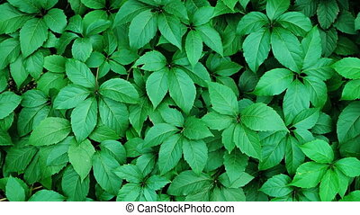 Gentle Breeze Stirring Leaves of Plants in a Garden. FullHD...