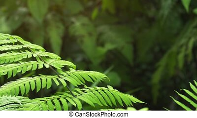 Gentle Breeze Stirring Tropcal Ferns in the Jungle -...