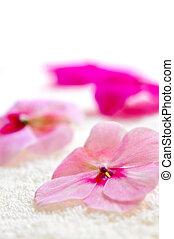 Gentle flower on luxury towel - Gentle fresh flower on ...
