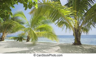 Gentle Ocean Breeze stirs Palm Fronds on Tropical Beach -...