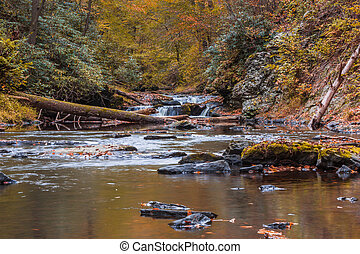 Gentle river through the forest surrounded by peak fall foliage