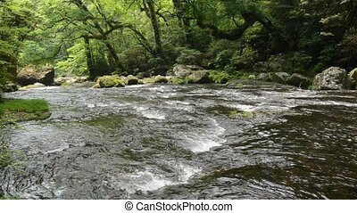 Gentle river - Flow of gentle river and primeval forest with...