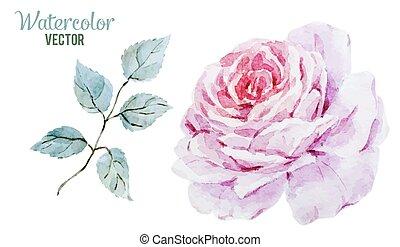 Gentle roses - Beautiful vector image with gentle watercolor...
