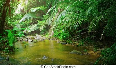 Gentle Tropical rains on a Natural Stream with Sound