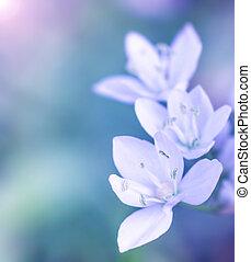Gentle white flowers