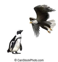 gentoo penguin, american bald eagle in flight