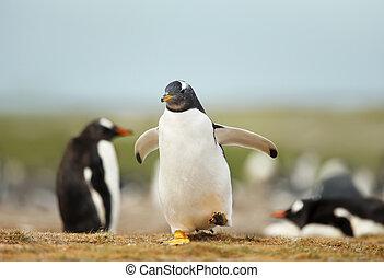 Gentoo penguin chick running on a coastal area