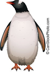 Gentoo Penguin - Illustration of a gentoo penguin