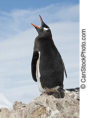Gentoo Penguin yawns on a background of blue sky.