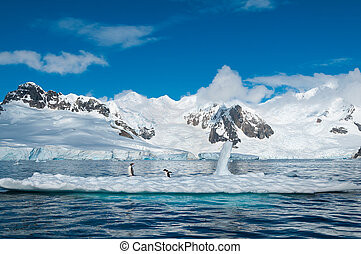 gentoo, pingüinos, en, iceberg, antártida