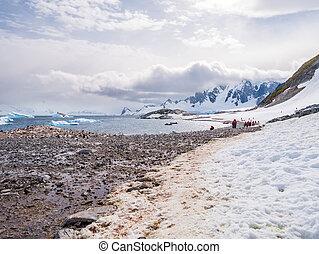 gentoo, pingüinos, y, turistas, el caminar en la playa, de, cuverville, isla, en, errera, canal, antártico, península, antártida