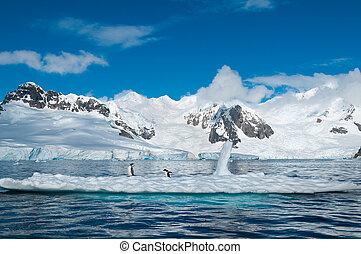 gentoo, pinguini, su, iceberg, antartide