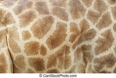 Genuine leather skin of giraffe background