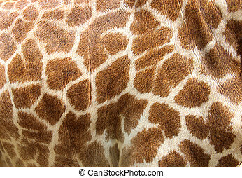Genuine leather skin of giraffe with light and dark brown...