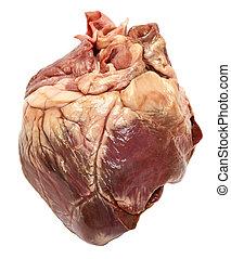 Genuine swine heart isolated on white background. Very...