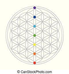 geometri, liv, blomma, färgrik