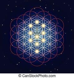 geometri, starry, bakgrund, helig, sky, liv, blomma, träd