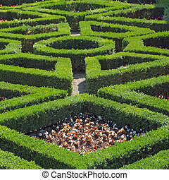 geometric pattern of green hedge flowerbed in Boboli  Gardens in Florence, Italy, Europe