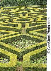 geometric pattern of green hedge flowerbed in formal garden...