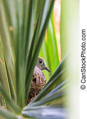 Geopelia striata and bird's nest on a tree green in the midst of nature on a sunny day bright