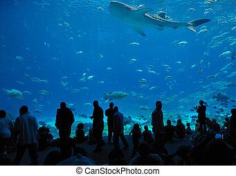 The Georgia Aquarium, the world's largest aquarium, in Atlanta, Georgia