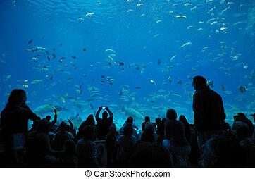georgia, aquarium