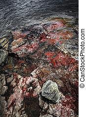 Georgian Bay rocks - Closeup of colorful rocks at rugged ...